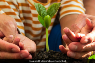 This Van Mahotsav, Go Green By Planting A Tree