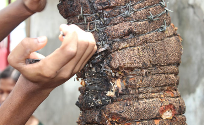 Inserting nails in trees structurally damages them and makes it difficult for them to live long