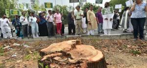 Delhi Government Revokes Centre's Permission To Cut Trees In Delhi For NBCC Project