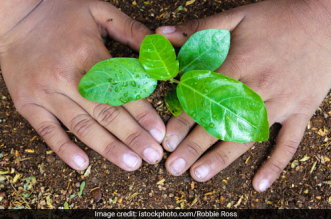 Van Mahotsav : National Zoological Park In Delhi Decides To Plant 50,000 Saplings