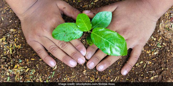 Van Mahotsav : National Zoological Park In Delhi Decides To Plant 50,000 Saplings