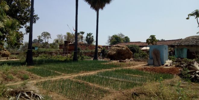 Human Waste Turned Into Manure Is Being Used For Farming: A