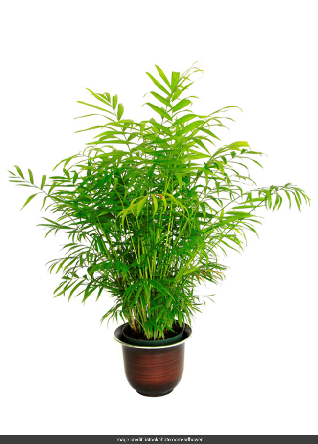 5 Plants To Make Your Home Clean And Green And Combat Indoor Air Pollution Do It Yourself