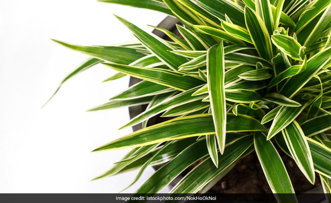 Combating Indoor Air Pollution: 5 Plants To Make Your Home Clean And Green
