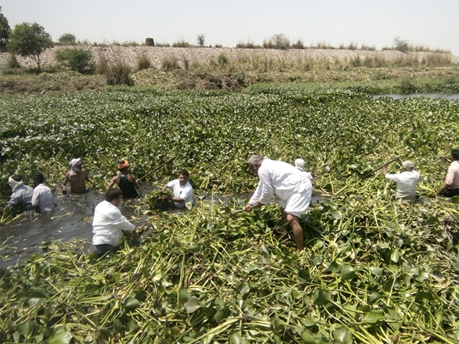 Raman Kant and his team of volunteers de-weeding the Hindon river