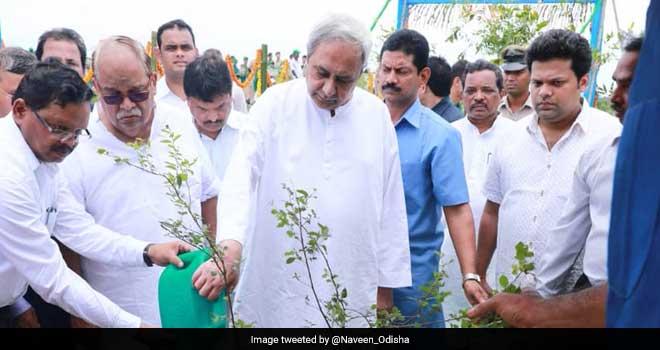 Odisha to spend Rs 5,000 crore to plant two crore saplings on the banks of Mahanadi