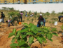 Meet 35-Year-Old Green Warrior From Bengaluru, Who Is Planting Trees Across India Since 2007