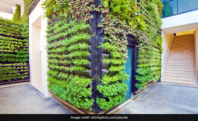 Bring Greenery To Your Home And Bid Adieu To Pollution: A Complete Guide To Do Vertical Gardening At Home