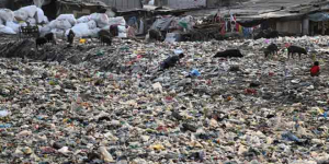 Bombay High Court Raps Maharashtra Government, BMC After Sea Dumps Trash On Mumbai Shores