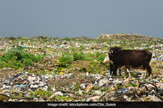 Allot Land For Garbage Dumping Ground In 2 Months: High Court To Maharashtra
