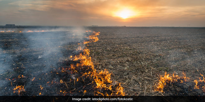 NGT asks Centre to submit report on helping farmers prevent stubble burning