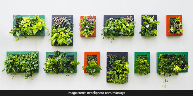 Tree Plantation: Vertical gardens will be set up on drains, flyovers and metro rail corridors to reduce air pollution