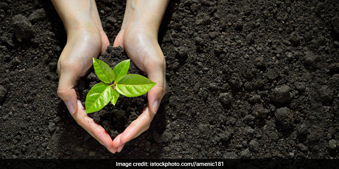 Plant Trees In Your Neighborhood And Join NDTV-Dettol Banega Swachh India This Gandhi Jayanti