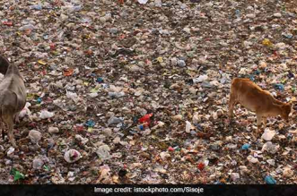 Solid Waste Management In Delhi: Expert Committee Will Be Set Up, LG Tells Supreme Court