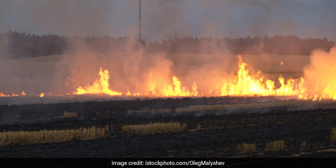 Stubble Burning: Punjab Government Launch Mobile Apps To Help Check Burning Of Crop Residue