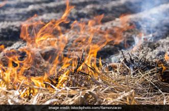 Air Pollution: Farmers In Punjab, Haryana Defy Ban On Stubble Burning