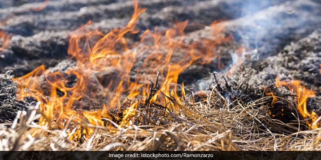 Air Pollution: Farmers In Punjab, Haryana Defy Ban On Stubble Burning