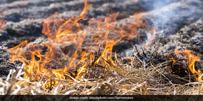 stubble-burning-contributes-2-percent-delhi-pollution