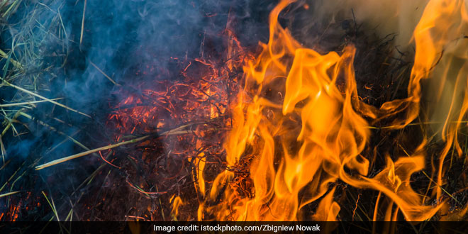 Punjab, Haryana Witness Decline In Stubble-Burning, Says Punjab Pollution Control Board