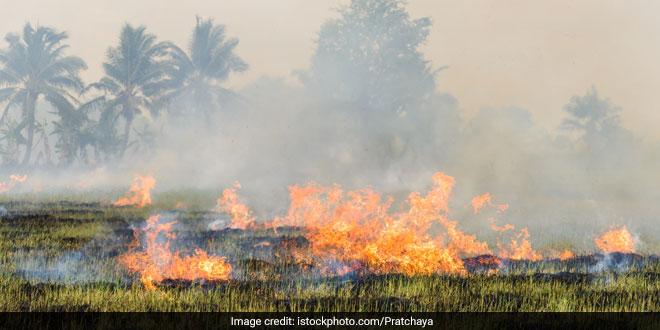 stubble-burning-india
