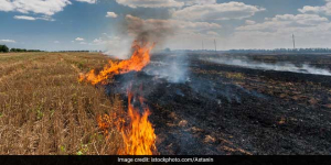 IKEA Plans To Convert Rice Straw Into Home Products To Tackle Air Pollution From Stubble Burning In Delhi-NCR