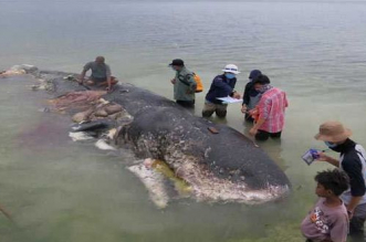 Whale Found Dead In Indonesia With 115 Plastic Cups In Stomach