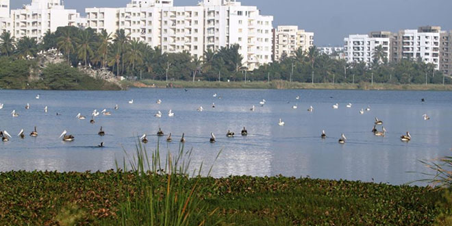 Citizens in Bengaluru beautify Jakkur lake by planting 300 varieties of trees