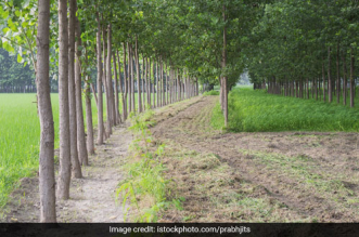 Punjab Introduces 'e-PEHaL', A Mobile Application To Monitor Tree Plantation