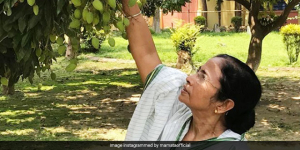 National Pollution Prevention Day: 'Save Green And Stay Clean', Says West Bengal Chief Minister Mamata Banerjee