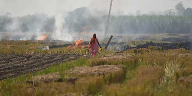 Air Pollution: Reduction In Active Fire Incidents In Punjab, Haryana This Year, Said Minister Mahesh Sharma