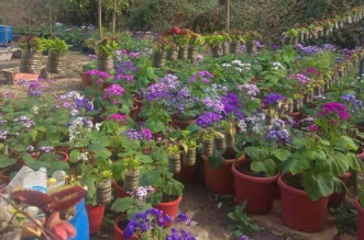 2,000 plastic bottles have been reused to make a vertical garden in Indore