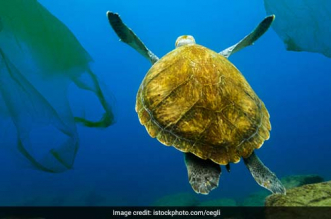 marine-litter-plastic-pollution-india-norway-germany