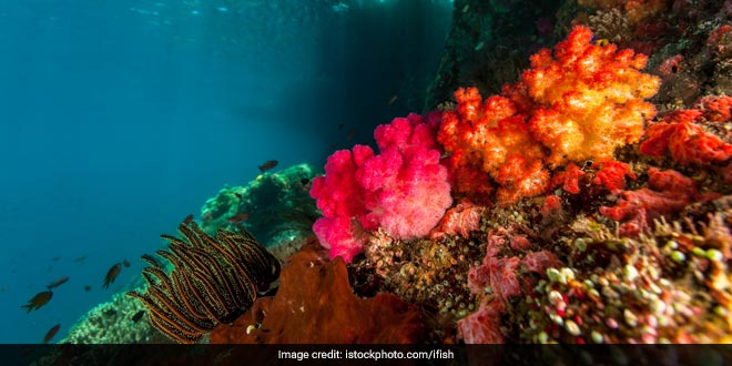 sea-squirts-plastic-pollution
