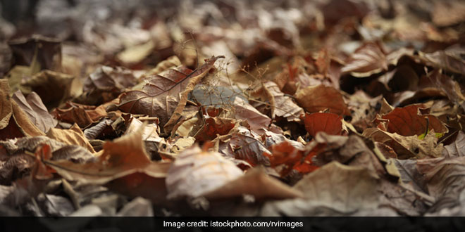 Cleanest Capital City Bhopal Launches Golden Leaf Movement, Promotes Composting Of Dry Leaves