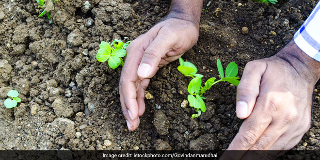 Uttar Pradesh Government To Plant 7.5 Lakh New Saplings In Noida To Improve Green Cover