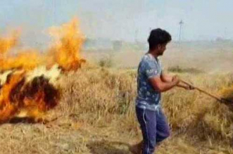 Air Pollution: Viable Alternative Emerges To Burning Paddy Straw In Punjab