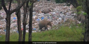 Plastic Is Taking A Toll On Our Planet As This Heartbreaking Picture Of An Elephant Feeding On Waste Proves