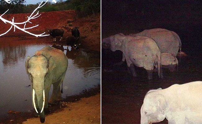 Renewable Energy: Solar Energy Is Keeping Animals Hydrated In This Karnataka National Park