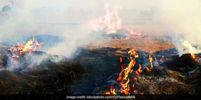 There Has Been Reduction In Incidents Of Paddy Residue Burning By Farmers, Says Agriculture Minister Narendra Singh Tomar