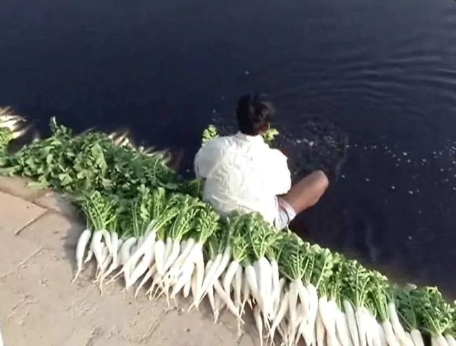 Vegetables Grown In Yamuna Floodplains Contaminated With Toxic Heavy Metals, Reveals NEERI