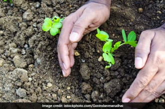 Delhi Gurdwaras To Go Green, Will Plant 1 Lakh Trees To Mark The 550th Birth Anniversary Of Guru Nanak Dev