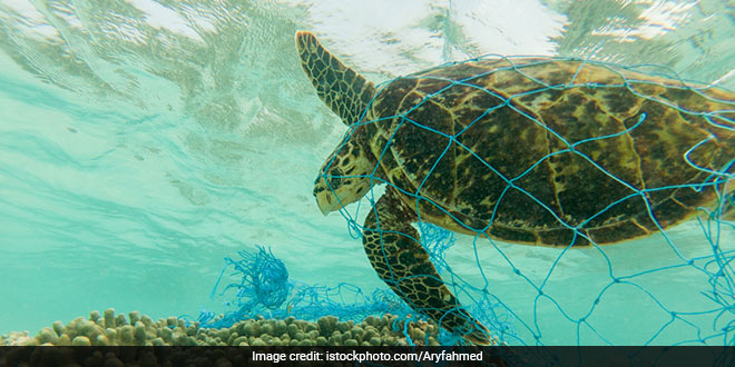Plastic Pollution: Green Turtles Eating Plastic As It Resembles Their Food, Finds A New Study
