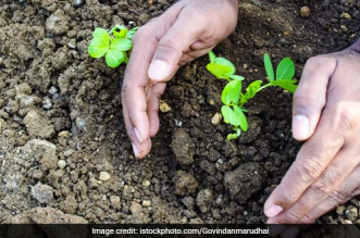 This Gujarat Institute Mandates Tree Plantation As Form Of Punishment