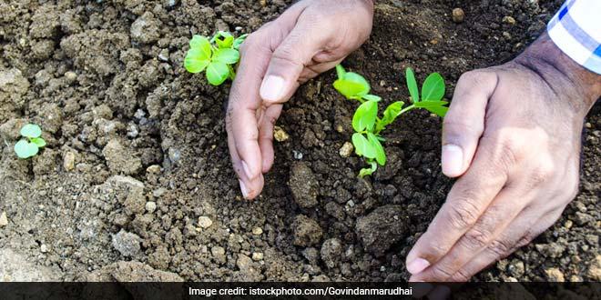This Gujarat Institute Mandates Tree Plantation As Form Of Punishment