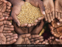 A Holistic Approach To Food And Nutrition Security This World Food Day, Say Experts