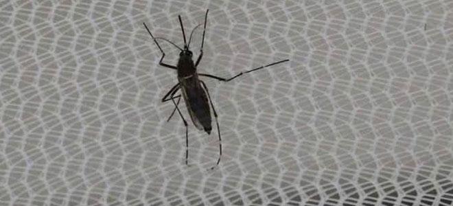 Dengue Cases Spike In Uttar Pradesh, Steps Prove Ineffective