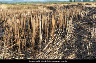Sweden Offers Alternatives To Tackle Stubble Burning, Launches Project To Produce Green Coal From Paddy Straw