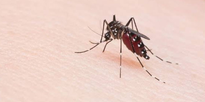 India Saw 28 Per Cent Reduction In Malaria Cases Last Year: World Health Organization
