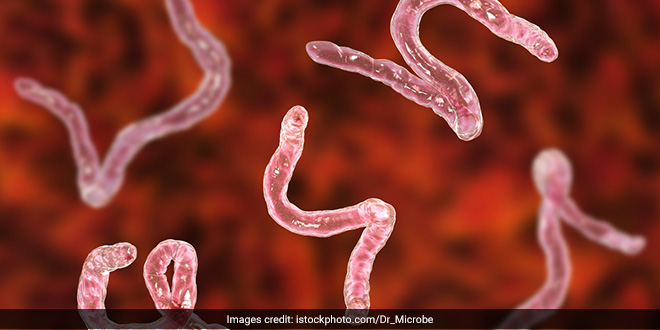 National Deworming Day 2020: A Manual On Intestinal Worms And Their Prevention