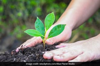 CM Naveen Patnaik Plans To Increase Green Cover Under 'Sabuja Odisha', Plant Over 1.30 Lakh Hectares Of Land